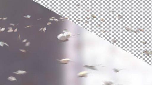 Butterflies Element